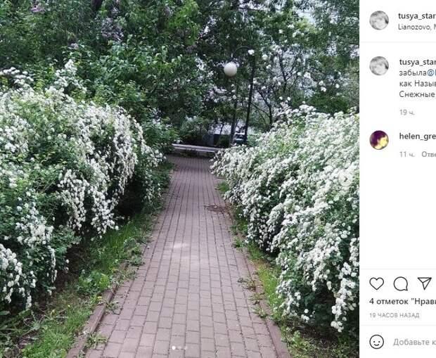 Фотокадр: кустарники в Лианозове покрылись «снегом»