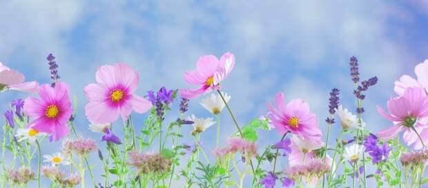 Цветы/pixabay.com