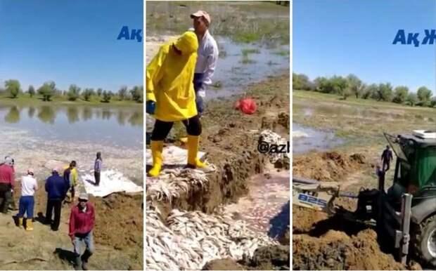 Около тонны мертвой рыбы обнаружено в водоёме в Атырауской области