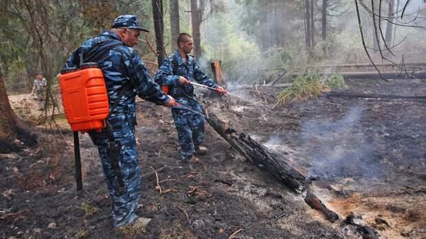 МЧС попросило не ходить в леса Ленобласти из-за повышенной пожароопасности