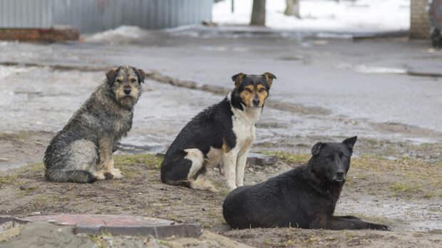 В Коми обнаружили тело женщины со следами укусов животных