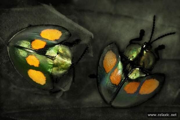 Мир природы Джима Хоффмана (23 фото)