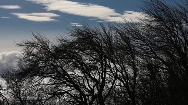 Синоптики предупредили об усилении ветра до 20 м/с в Волгоградской области