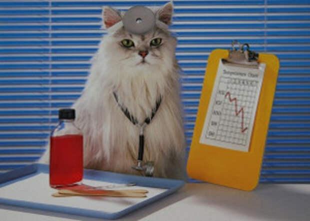 От чего и как кошки лечат