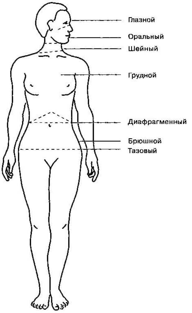 ПОЯСА РАЙХА - 7 СЕГМЕНТОВ МЫШЕЧНОГО ПАНЦИРЯ
