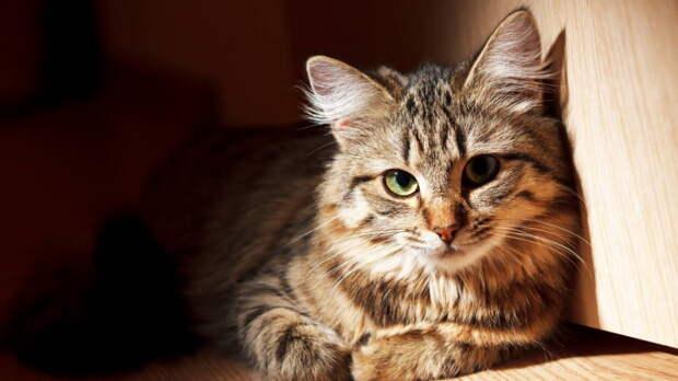 Определяем на глаз: как можно узнать возраст кошки