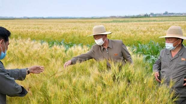 На страх и рис: на самом ли деле в КНДР продовольственный кризис