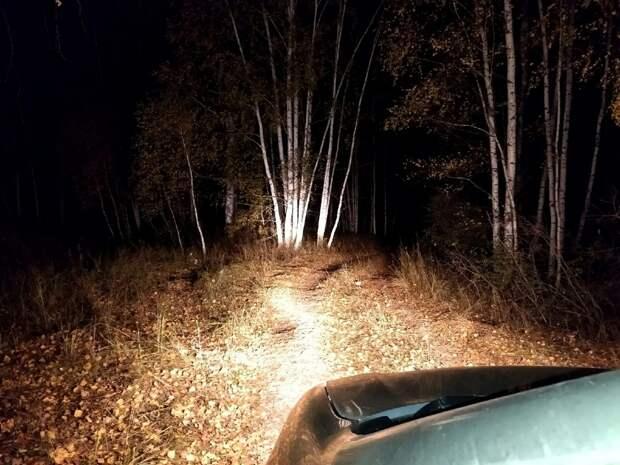 В Спасском районе нашли двух заблудившихся грибников