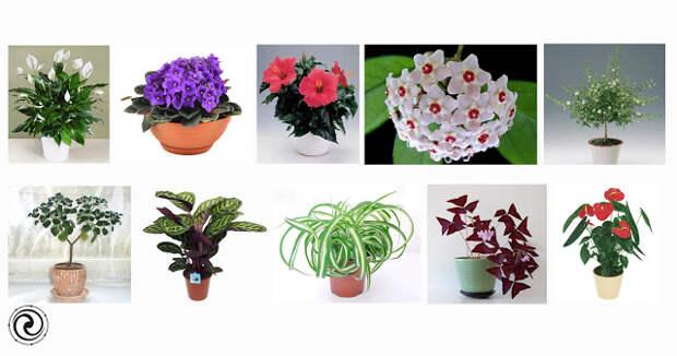Какие комнатные цветы приносят женщинам счастье