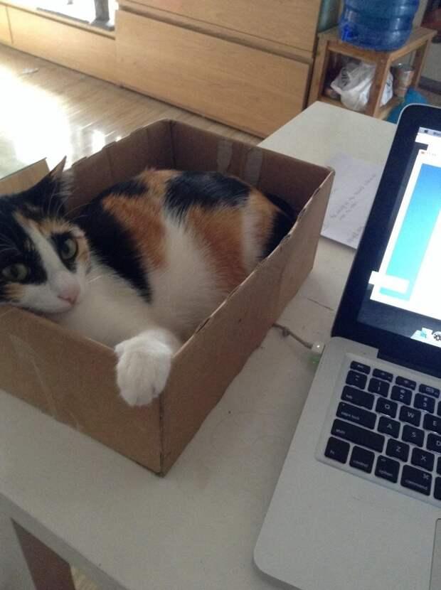 Пришлось поставить коробку, чтобы не бегал по клавиатуре