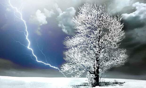 Заколдованное дерево. Мистическая история из жизни