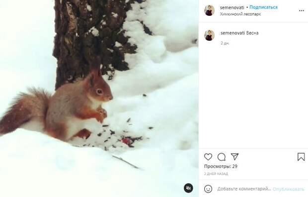 Фото дня: пушистый грызун во время трапезы в Химскинском лесопарке