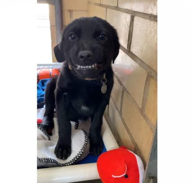 Чтобы по-быстрее найти хозяина приютский щенок даже научился улыбаться