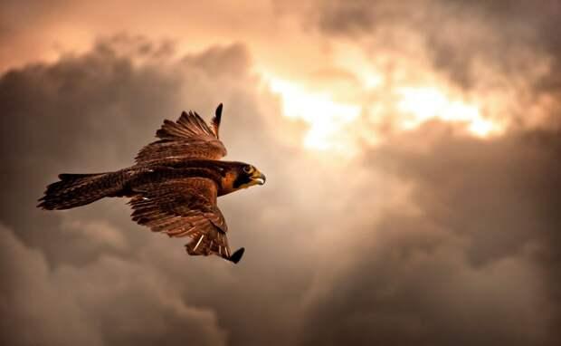 ТОП-10 самых быстрых птиц на Земле