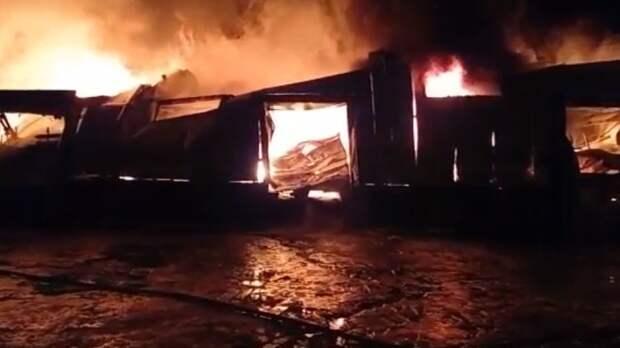 Жертвами пожара в приюте на Урале стали 30 собак