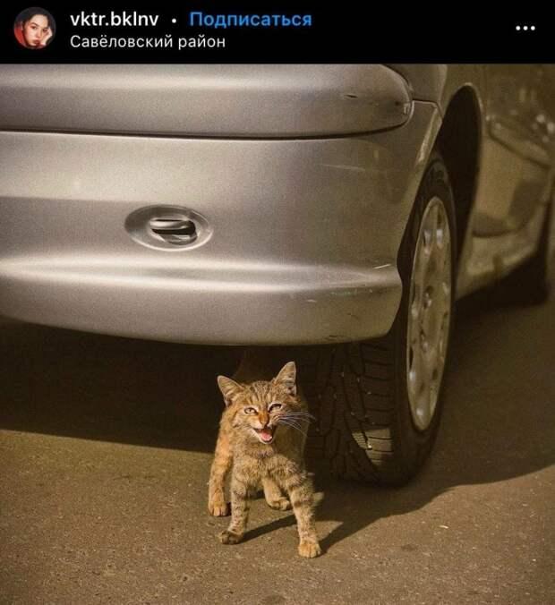 Фото дня: кот-бандит в Савеловском