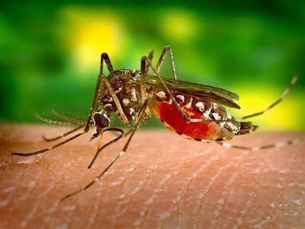 Биолог Марьинский развеял миф о том, что комары кусают людей с определенной группой крови