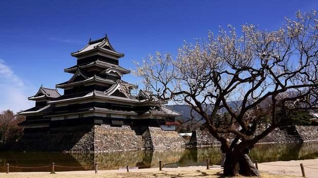 В Японии наследником престола стал брат императора Нарухито