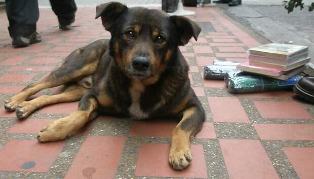 Бездомную собаку отловили в поселке Подольска по просьбе жителя
