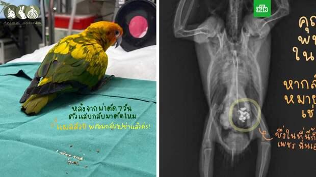 Попугай украл и съел больше 20 бриллиантов в Таиланде