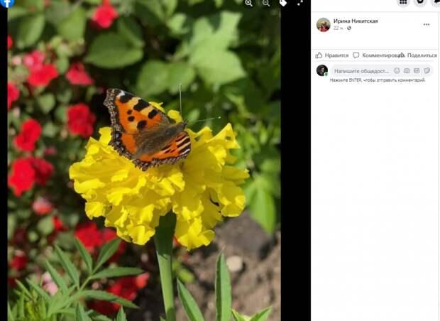 Фото дня: бабочка крапивница позировала в Свиблове