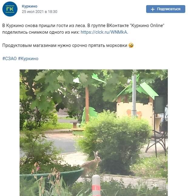 Заяц вновь отправился на «гастроли» в Куркино