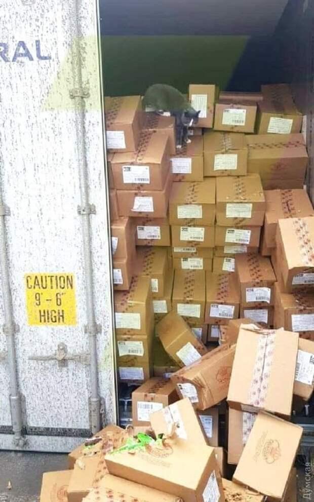 Одесская кошка-морячка три недели плыла в контейнере с конфетами и оказалась в Израиле