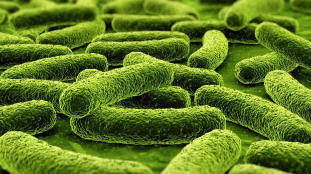 Туберкулёз. болезни, вирусы, история, эпидемия