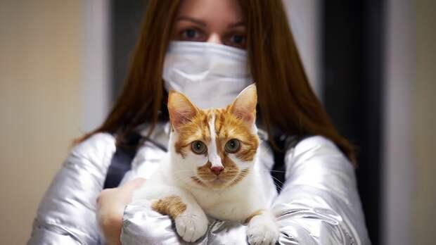 Первая в мире вакцина от COVID-19 для животных зарегистрирована в России