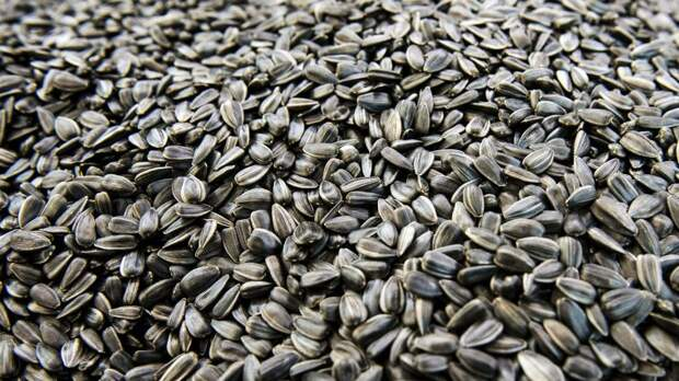 На Ставрополье за счет господдержки увеличат выпуск жареных семечек