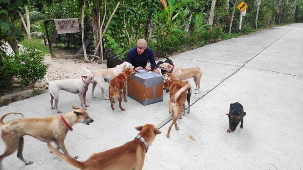 Супруги приютили 15 бездомных собак, а они помогли им пережить потерю своего домашнего любимца