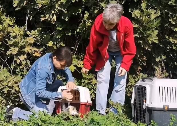 Волонтеры обнаружили в поле голодную, тощую собаку с малюсенькими щенками