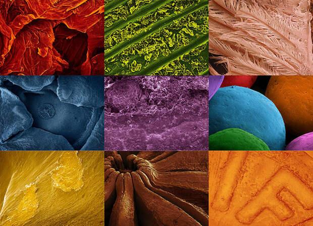 Фуд-фотография через микроскоп