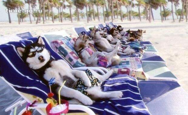 19 Животных, Которые Проводят Лето Лучше, Чем Люди