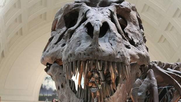 Новый вид динозавра-хищника размером с курицу обнаружили в Великобритании
