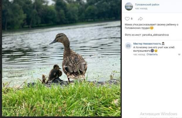 Утиная семья на берегу Головинских прудов