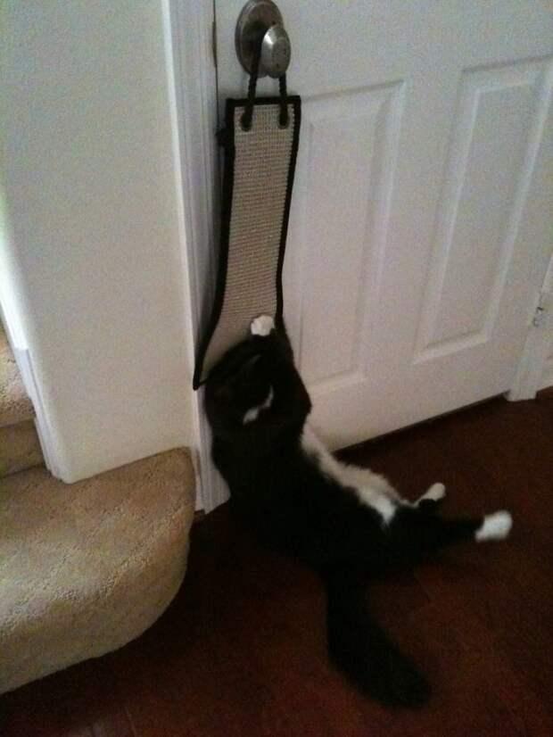 Когда устал точить когти и решил прилечь животные, коты, кошки, неожиданно, привычки, странности, фото, юмор