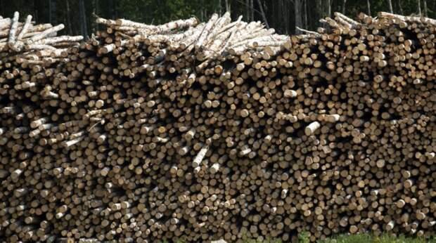 Составы с лесом-кругляком – в Китай? Очевидец заснял, что происходит за год до полного запрета