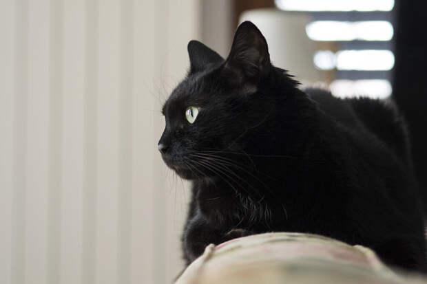 Чёрный кот терроризировал охрану магазина в Новосибирской области