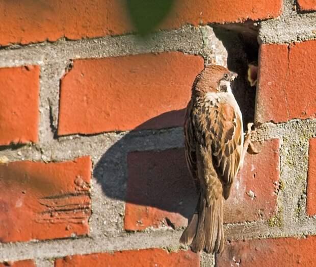 Птицы выбирают жилище человека по двум основным причинам: во-первых, это безопасно, а во-вторых — тепло.