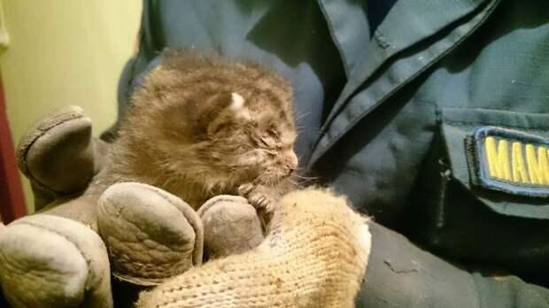 Самый маленький спасенный: как сотрудники МЧС спасли из электрощитовой котенка