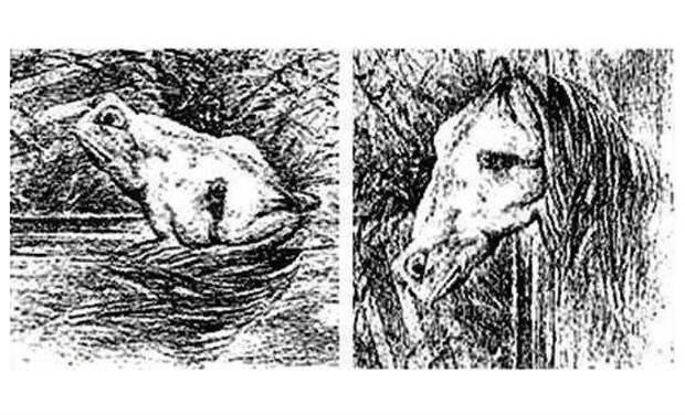 Лошадь или лягушка
