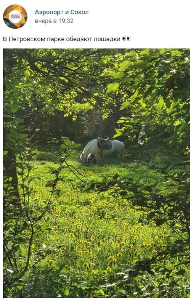 Фото дня: отдыхающая лошадь в Петровском парке
