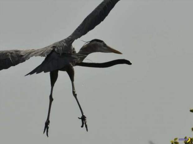 Природа: все пытаются выжить!