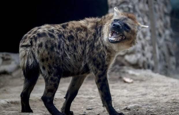 Уникальные способности некоторых животных