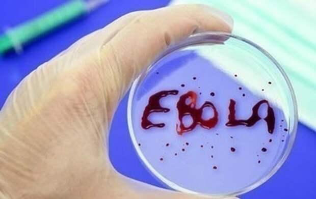 Ученые нашли лекарство от Эболы