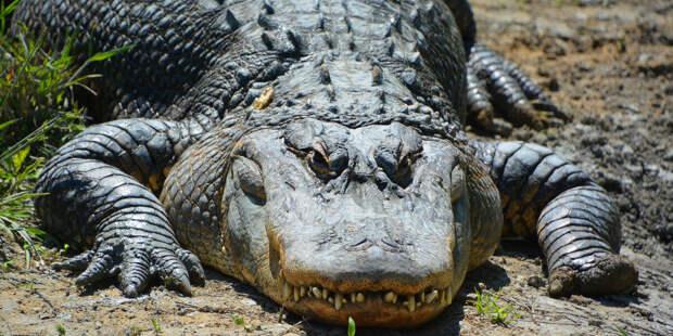 В Австралии нашли череп неизвестного древнего крокодила