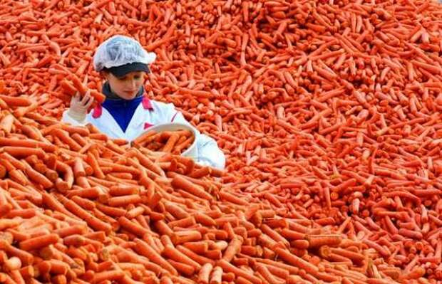 Зачем нам растить свою морковь – Россия и без того великая страна!