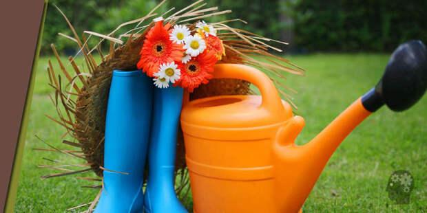 Какие огородные проблемы можно решить с помощью обычной зубной пасты