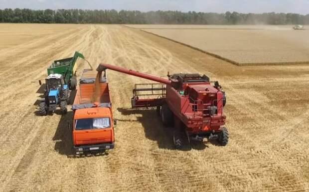 Bloomberg: Действия России приведут к росту цен на пшеницу